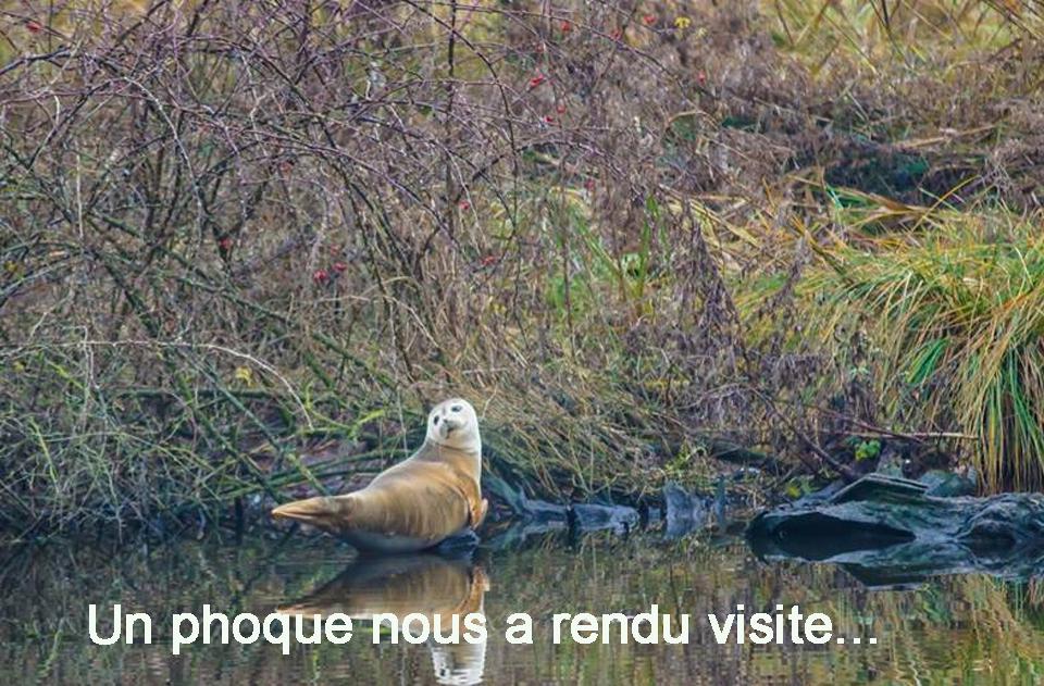 z_Les marais (19